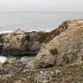 Exploring the various headlands, coves, and crannies of Bodega Head.- Bodega Head
