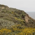 Trails wrap around the perimeter of the headland.- Bodega Head