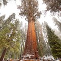 The off season is a great season to see General Sherman.- General Sherman Tree