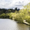 Lost Lagoon is lined with trees and paths that provide a beautiful opportunity for a leisurely stroll.- Stanley Park