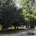 The sun illuminates the trees in all shades of green along the trails.- Stanley Park