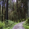 A beautiful forest on the Lake Trail between Beaver Lake and Third Beach.- Stanley Park
