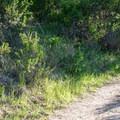 Fremont Peak Trailhead.- Fremont Peak Hike