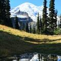 Mount Rainier (14,411') from the Wonderland Trail en route to Summerland and Panhandle Gap.- Summerland + Panhandle Gap