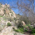 Typical section of Oak Canyon Trail.- Oak Canyon + Grasslands Crossing Loop, Mission Trails Regional Park
