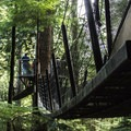 A close up of the suspended walkways among the canopies.- Capilano Suspension Bridge Park