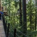 Guests enjoying the views from above on the Treetops Adventure.- Capilano Suspension Bridge Park