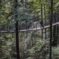 The bridges between trees sway as you cross.- Capilano Suspension Bridge Park
