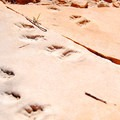 As you start down the sandstone switchbacks, look for fossilized footprints.- Hermit Trail