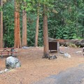 Typical campsite at Sentinel Campground.- Sentinel Campground