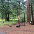 Meadow campsite, Sentinel Campground.- Sentinel Campground