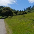 Starting out in the meadows.- Sky Trail Loop, Bear Valley to Mount Wittenberg