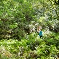 The rain forest.- Sky Trail Loop, Bear Valley to Mount Wittenberg