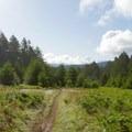 Open meadow.- Sky Trail Loop, Bear Valley to Mount Wittenberg