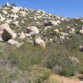 Typical section of the trail once it departs from the banks of Lake Poway.- Potato Chip Rock, Mount Woodson