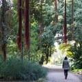 Botanical Gardens in Golden Gate Park.- Golden Gate Park
