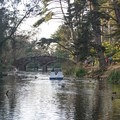 Paddleboats are a popular attraction at Stowe Lake.- Golden Gate Park