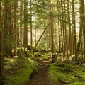 White River Trail.- Snoquera Falls Loop