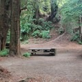 Typical wooded site.- Reef Campground