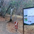 The Paradise Creek Trail leads out from the campground.- Buckeye Flat Campground
