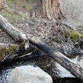 It may look dry from a distance, but a small stream snakes through Water Canyon near most of the camp and picnic sites.- Water Canyon Recreation Area