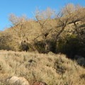 The riparian area is rare in this desert environment, and trees and shrubs harbor a number of bird types like woodpeckers, quail, and meadowlarks.- Water Canyon Recreation Area
