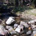 Lehman Creek flows lazily through the campground.- Upper Lehman Creek Campground