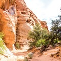The trail down the canyon is very flat and pleasant.- Cohab Canyon