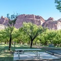 One of the historic orchards surrounding the campground.- Fruita Campground