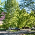 Gorgeous cottonwood trees shade the campground.- Fruita Campground