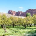 It must be so beautiful when the trees are in bloom!- Fruita Campground