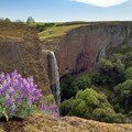 Phantom Falls in the spring.- Ravine + Phantom Falls, North Table Mountain Ecological Reserve