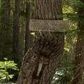 Blazes carved into the Douglas firs mark the snowy trail up to Indigo Lake.- Indigo Lake Trail