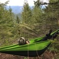 A great place to hang a hammock with nobody around. - Cedar Butte