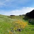 California native wildflowers.- Fern Falls + Coal Canyon Falls