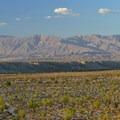 Field of ocotillos- Anza-Borrego Desert State Park