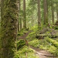 The Greenwater River Trail weaves through a dense forest of hemlock and fir.- Greenwater + Echo Lakes