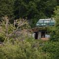 Houses line the banks along the north end of Vashon Island.- Vashon Island Circumnavigation