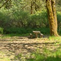 Large and shady campsite in Secret Campground.- Secret Campground