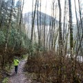 Trail en route to Twin Falls along the South Fork Snoqualmie River.- Twin Falls Hike via West Trailhead