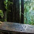 Old growth Douglas fir (Pseudotsuga menziesii).- Twin Falls Hike via West Trailhead