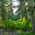 Typical campsite in Black Pine Horse Camp + Campground.- Black Pine Horse Camp + Campground