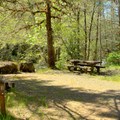 Typical campsite in Campers Flat Campground.- Campers Flat Campground