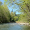 Calm spot for swimming in the Middle Fork of the Willamette River.- Campers Flat Campground