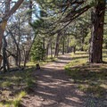 The North Rim foliage benefits from cooler temperatures and a higher annual precipitation.- Transept Trail