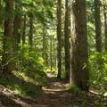 The dense forest provides plenty of shade along the trail. - Vivian Lake