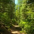 A lush forest surrounds the Vivian Lake Trail.- Vivian Lake