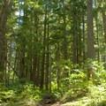 Diamond Peak Wilderness. - Vivian Lake