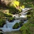 Fall Creek in Diamond Peak Wilderness. - Vivian Lake