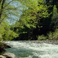 Middle Fork of the Willamette River running past Secret Campground.- Secret Campground